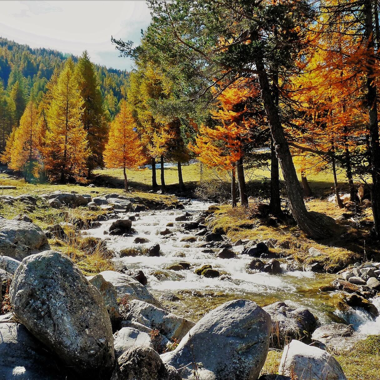 ©LauriereJP_Cervières automne
