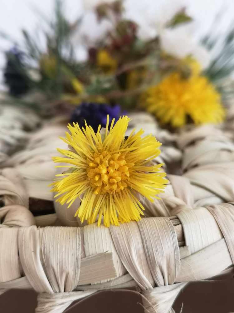 Fleurs des Alpes-Tussilage