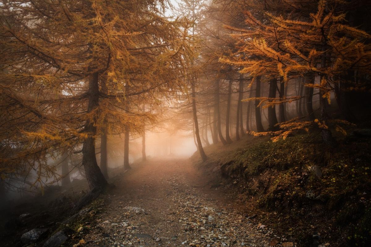 Chemin en automne Vallée Étroite